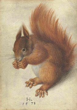 Rode Eekhoorn, Hans Hoffmann