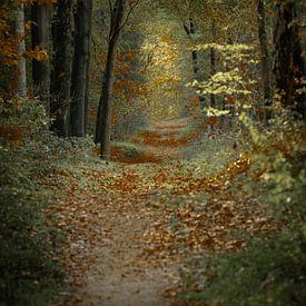 Wandeling in het herfstbos van Erna Böhre