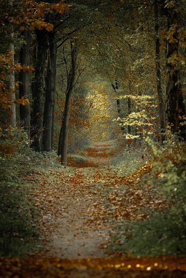 Wandeling in het herfstbos