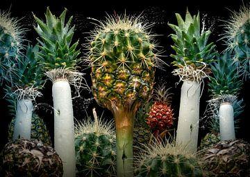Ananas suculentus von Olaf Bruhn