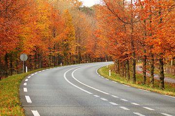 """autumn roadview"" van"