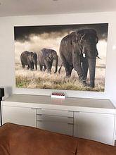 Klantfoto: Olifanten parade van Marcel van Balken, op canvas