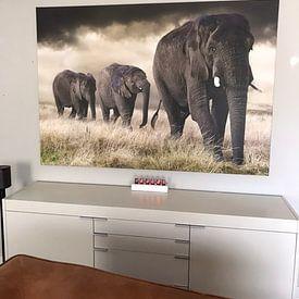 Kundenfoto: Elefanten Parade von Marcel van Balken, auf leinwand