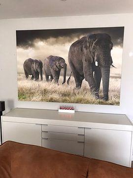 Kundenfoto: Elefanten Parade von Marcel van Balken