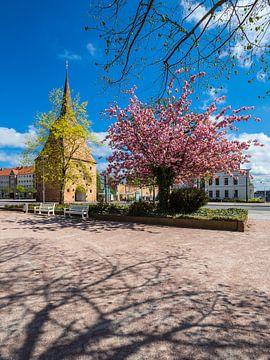 Das Steintor in der Hansestadt Rostock im Frühling von Rico Ködder