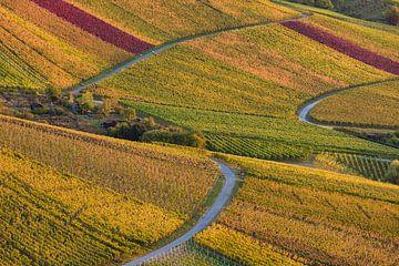 Wijngaarden in de herfst in Stuttgart van