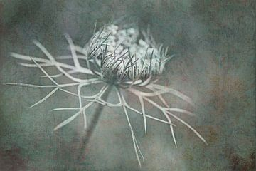 Art de la carotte sauvage sur Jacqueline Gerhardt