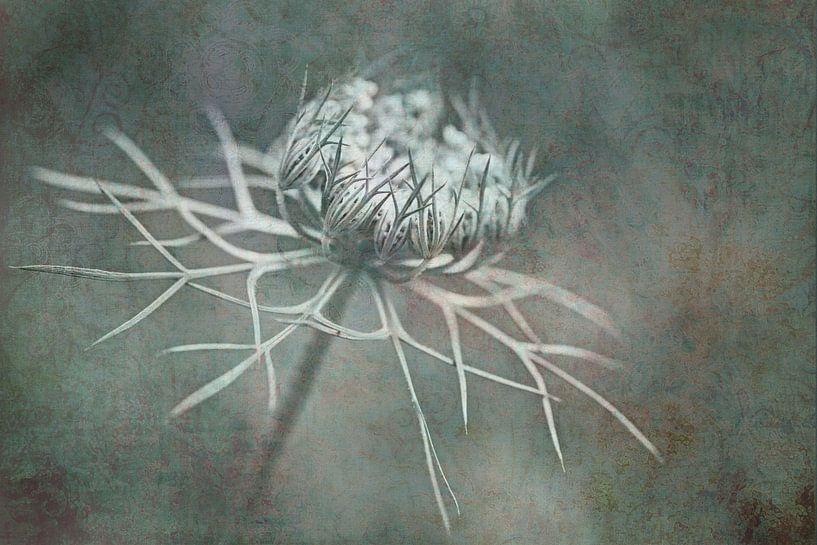 Wilde peen Art van Jacqueline Gerhardt