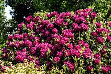 Rotterdam-Botanische Tuinen Trompenburg 09 von Hans Blommestijn