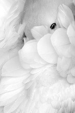 Schwarz-Weiß-Aufnahme eines träumenden Basstölpels (Morus bassanus) von AGAMI Photo Agency