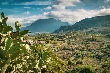 Pure nature on Gran Canaria van