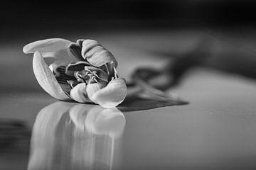 Blumen Schneeglöckchen in schwarz und weiss von Jefra Creations