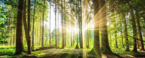 Beautiful forest van Günter Albers