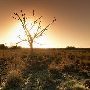 Groote Heide 5