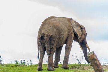 Sehen Sie, wie groß und stark dieser Elefant ist von didier de borle
