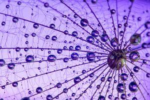 Purple Maze von
