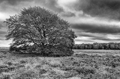 Herfst op de Ginkelse Heide bij Ede
