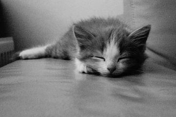 Schwarzes und weißes Kätzchen von caitlin huijsing