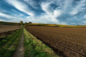 Weinberg im Herbst von Jo Beerens