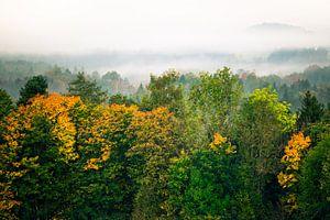 Wald im Nebel von