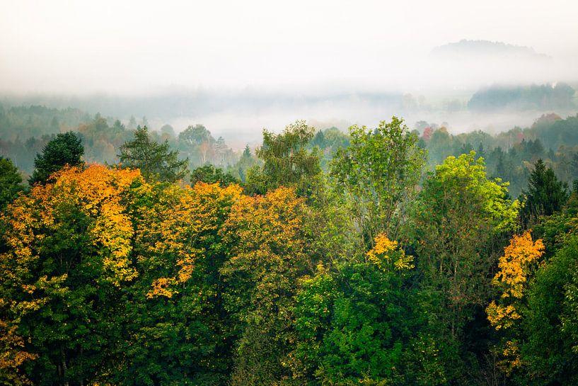 Wald im Nebel van Holger Debek