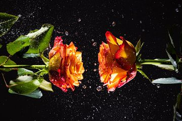 Zwei Rosen von Nando Harmsen