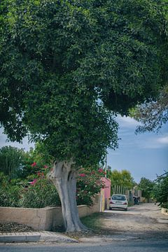 treescape van Elianne van Turennout