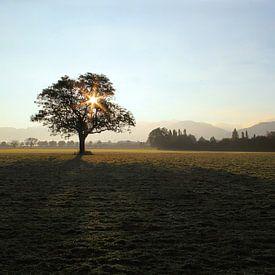 Herbstmorgen von Patrick Lohmüller