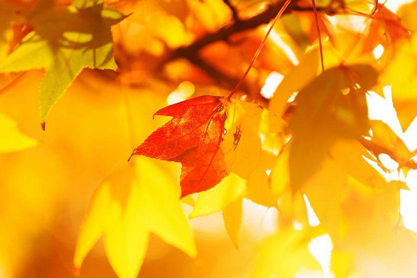 Herbstlaub von Frank Herrmann