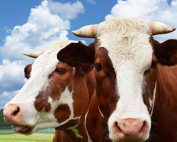 Rot-weiße Kuh mit Hörnern von Hendrik-Jan Kornelis