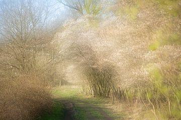 Schilderachtige krentenbomen vol bloesem van Karla Leeftink