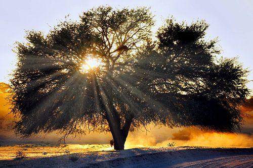 Morgens in Afrika von W. Woyke