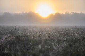 Spinnweben auf der Heide von Tania Perneel