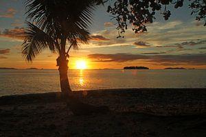 Typische zonsondergang met palmboom op Fiji eiland