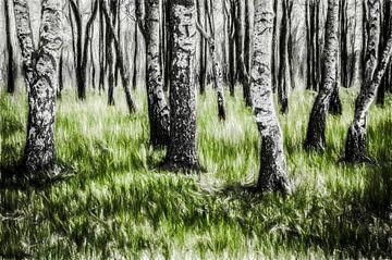 Berkenbos met gras, zie de omschrijving van John Van Maris
