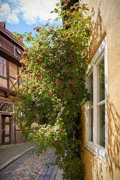 Gasse mit einem Strauch Heckenrosen in Quedlinburg von Heiko Kueverling