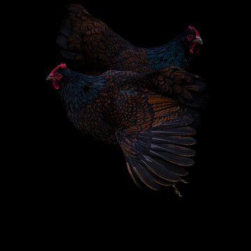 Doppelt geschnürte schwarz-braun bepelzte Barnevelder-Hühner mit schwarzem Hintergrund von J..M de Jong-Jansen