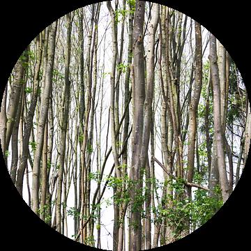 Lijnenspel gevormd door bomen van Devin Meijer