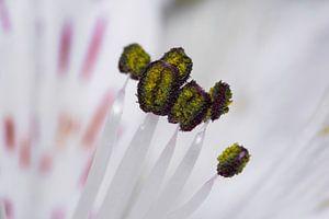 Fleur en macro van