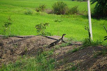 Lizard van Bart Cornelis de Groot