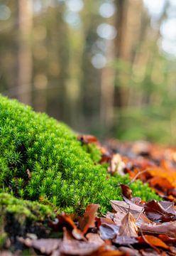 Bergje haarmos met herfstbladeren in bos