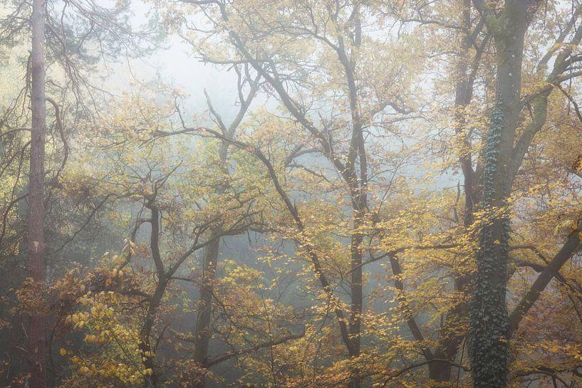 Des arbres dans le brouillard sur Tobias Luxberg