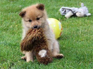 Finse Spits pupje  met speeltje van Maja Smits