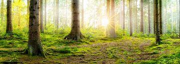 Zonsopgang in een mistig bos van Günter Albers