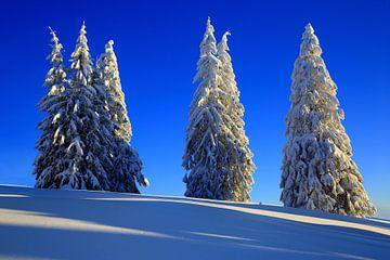 Schneebäume Feldberg Schwarzwald von Patrick Lohmüller