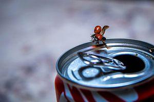 Liefheerbeestje op een blikje