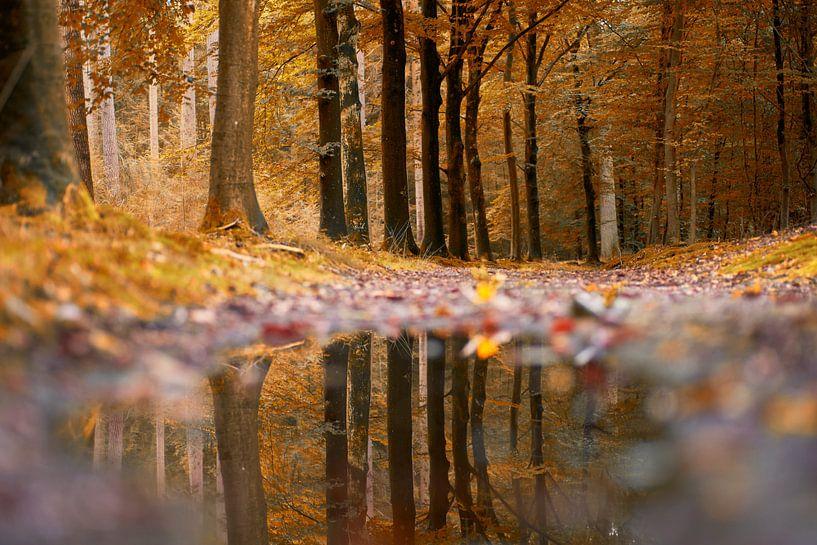 Reflectie in het bos van Cor de Hamer