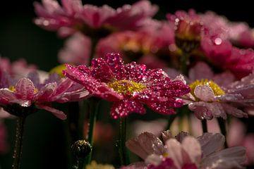 Zomerse bloemen van Carla van Zomeren