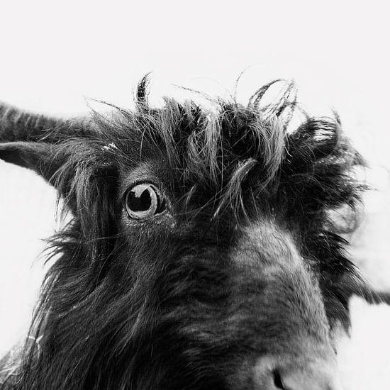 Charly the goat van Dorit Fuhg