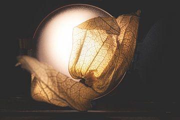sous les projecteurs sur Kay Mezarina Photography